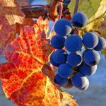 Новый завет или спелый и сладкий плод