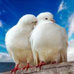 Молитва в духе или пребывание в любви Христа